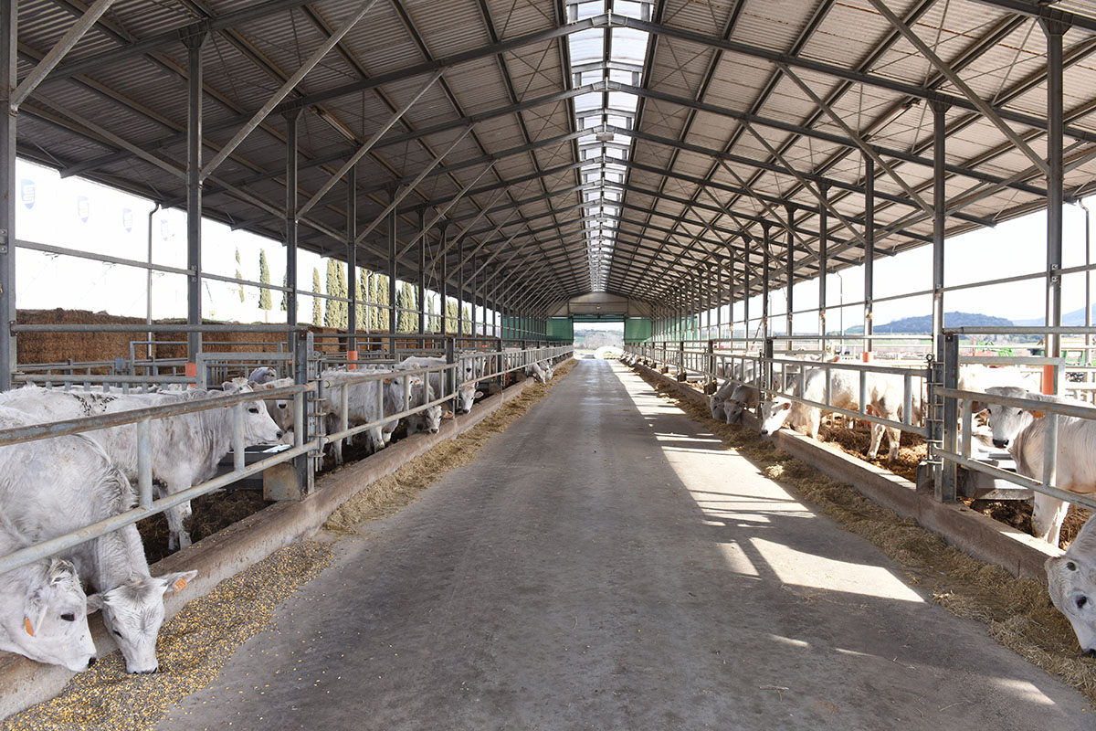 Happy cows in Due A farming structure
